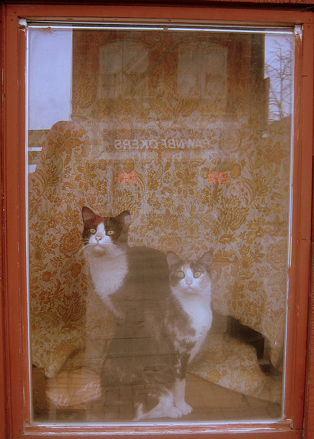 Cats in the Window of the Kozy