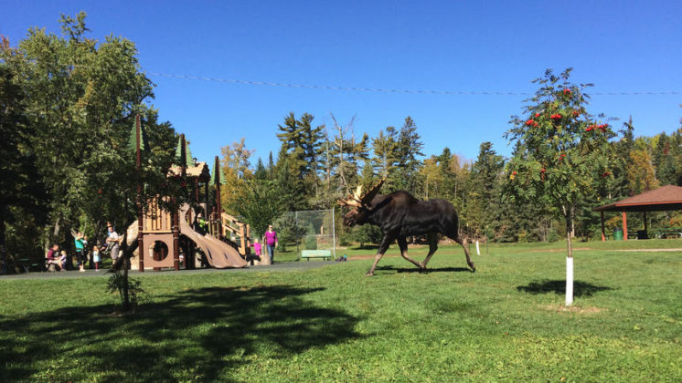 https://www.perfectduluthday.com/2016/10/02/bull-moose-party-lester-park/